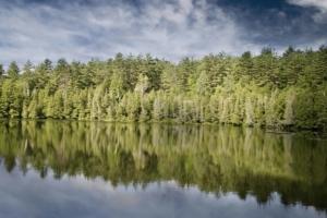 alberi specchiati su lago